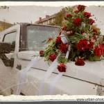 Rote Rosen der Liebe !