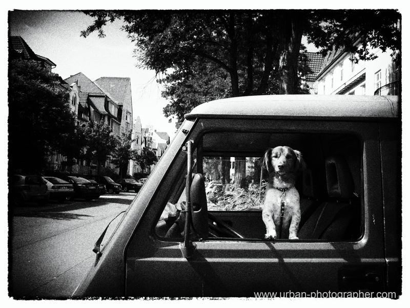 Hundeblick aus Auto Bremen