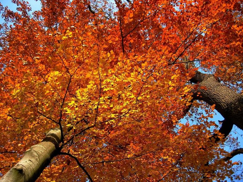 Deutschland im Herbst 3
